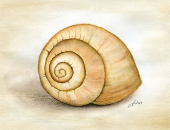Verkauft: Schneckenhaus - Aquarell, Zeichnung